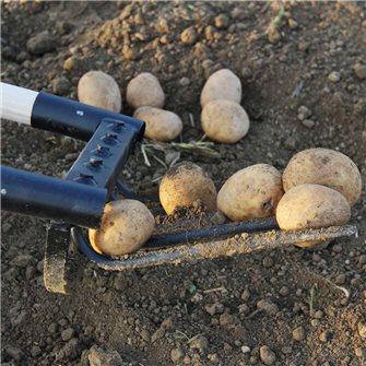 Quand et comment ramasser vos pommes de terre ?