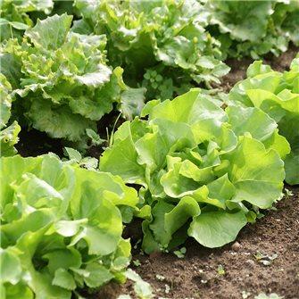 Que faire au potager et au jardin en juillet ?