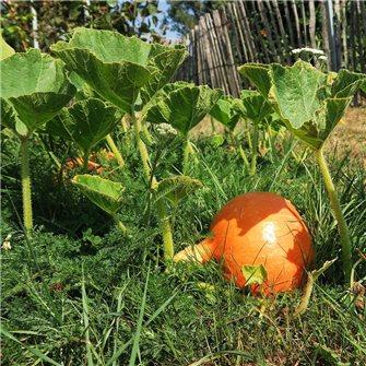 Que faire au potager et au jardin en octobre ?